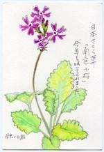 Nara_shirohato080507