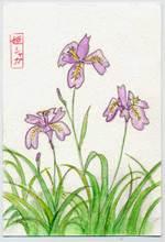 Nara_shirohato080509
