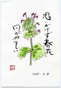 Hiroshi080606