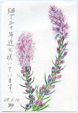 Shizuka080614