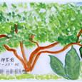 きょんさんの絵封筒 ~大きな木と鳥