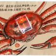 野の花の精さんの絵封筒 ~松葉ガニ