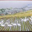 野の花の精さんの絵封筒 ~コハクチョウ