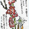 栃乙女 倫々さんの絵手紙-1