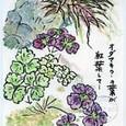 栃乙女 倫々さんの絵手紙 ~風知草