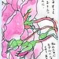 和子さんの絵手紙 ~ピンクのバラ