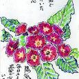栃乙女倫々さんの絵手紙