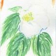 生け花とのコラボ(フォーマルハウト)