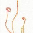 生け花とのコラボ(chon)