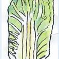 文さんの絵てがみ ~白菜
